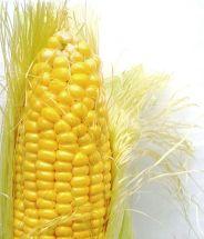512px-Corn_on_the_cob