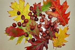 512px-Fall_leaves_and_acorns