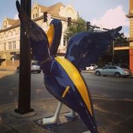 NAVY pelican in SNHU colors